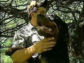 Redação Móvel fala sobre animais de estimação - Saiba quais são os cuidados necessários antes de colocar cães ou gatos dentro de casa.