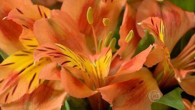 Produção de flores cresce em Itapeva, no Sul de Minas - Nos últimos três anos, aumentos cerca de 30%.