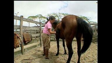 Conheça os cuidados básicos para a doma de cavalos - Prática é responsável por transformar um animal arisco em um companheiro diário.