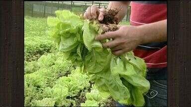 Produtores de hortaliças do Sul do ES amargam prejuízo após chuva - Quase todas as atividades agrícolas foram atingidas.
