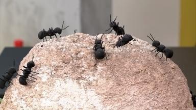 Formigas carregam ainda mais bactérias do que baratas - Não é recomendável usar inseticidas líquidos para combater formigas, já que isso criaria novos formigueiros. Um produto a base de gel é indicado para formigas 'doceiras'. No jardim, o melhor é o inseticida em pó, aplicado dentro do formigueiro.