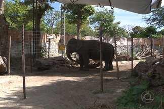 Prefeitura de João Pessoa finaliza espaço na Bica para a elefanta Lady - A elefanta, que engordou 500 quilos depois que foi adotada pela Prefeitura de João Pessoa, vai para um recinto com 1.200 metros quadrados, numa área de Mata Atlântica.