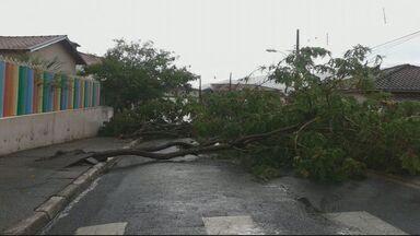Chuva e fortes ventos derrubam árvore em Santa Rita de Caldas (MG) - Chuva e fortes ventos derrubam árvore em Santa Rita de Caldas (MG)