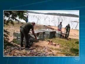 Mais de 50 macacos prego apreendidos são soltos em Guadalupe - Mais de 50 macacos prego apreendidos em operações contra o tráfico de animais são soltos em Guadalupe