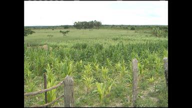 Chuva muda cenário da agricultura na região sudoeste - Com isso, a produção de café deve superar a do ano passado.