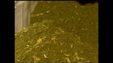 Produtores de erva-mate reclamam do preço da matéria-prima - Assista ao vídeo.