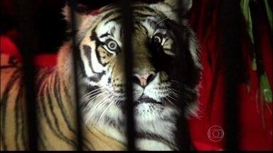 Serginho Groisman visita um zoológico durante a noite - Apresentador mostra como é a vida noturna dos animais