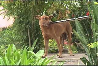Em Santarém, criança é atacada por cachorro enquanto brincava - Vítima foi mordida na perna direita e se recupera em casa. Cão foi encaminhado pelos bombeiros ao CCZ na manhã desta terça-feira.