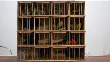 Suspeito de tráfico de animais é preso em ônibus com 25 aves no ES - Homem de 56 anos transportava 25 pássaros silvestres. Segundo a Polícia Ambiental, ele seguia para o Rio de Janeiro.