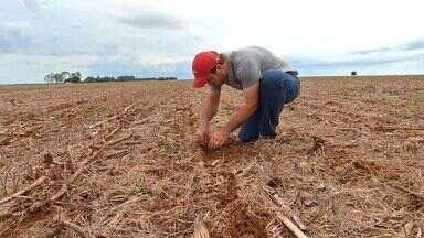 Agricultores correm para finalizar plantio de algodão no prazo - Agricultores de Mato Grosso estão com os trabalhos no limite do prazo considerado ideal para o cultivo.