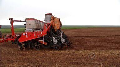 Lavouras de milho safrinha devem ocupar uma área menor em Mato Grosso - O plantio do milho safrinha este ano deve ocupar uma área menor no estado.