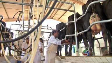 Ano começa bem para produtores de leite - Os produtores receberam em janeiro em média R$ 0,79 pelo litro do leite.