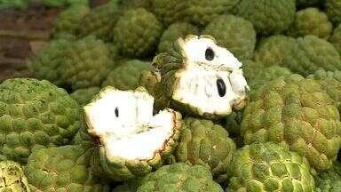 Produção de pinha pode ser feito durante quase todo o ano - O cultivo da fruta tem investimento baixo e retorno garantido.