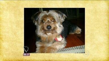 Ana Maria conta a história do cão Freddy roubado em SP - Cachorro foi roubado após dono deixar do lado de fora da padaria