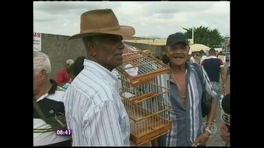 Mais Você flagrou comércio de animais na Bahia - A comercialização é feita sem pudores, as pessoas não se inibem com a câmera