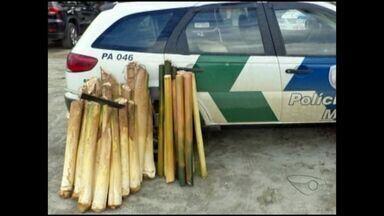 Palmito extraído ilegalmente é apreendido no Sul do ES - Polícia Ambiental chegou ao local após uma denúncia anônima.