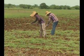 Estiagem prejudica produção de doces na Paraíba - As frutas que são utilizadas na fabricação de doces, em Patos, estão vindo de outros Estados do Nordeste.