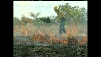 Focos de incêndio destroem florestas e pastos em Roraima - Por causa da estiagem, quase mil focos de calor já foram registrados este ano. É a maior concentração de queimadas do país. Para evitar que o fogo recomece, as equipes derrubam até as árvores já queimadas.