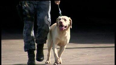 Cães farejadores são convocados para garantir segurança nos jogos da Copa - Setenta cães farejadores da Polícia Militar vão entrar em campo durante a Copa do Mundo. A missão é procurar drogas, armas e explosivos durante os jogos no DF.