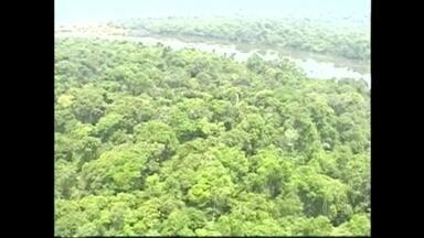Equipes retomam buscas a avião que desapareceu no Pará há dois dias - As equipes de resgate procuram pelo avião bimotor que desapareceu numa área de floresta nativa. Aviões da Força Aérea Brasileira e helicópteros da PM do Pará sobrevoam a região. A Defesa Civil ajudam por terra e pelos rios.