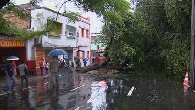 Árvore cai durante forte chuva e interdita rua no Centro de Manaus - Trânsito ficou lento e agentes do Manaustrans orientava motoristas no local.Oitizeiro quase caiu em casa, mas foi impedido por outra árvore.