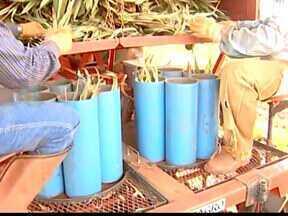Produtor rural desenvolve invenções para facilitar produção em Frutal, MG - Invenções já atuam em 14 estados brasileiros. Projetos ajudam na produção de pequenos agricultores.