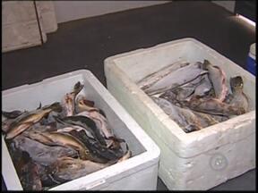 Polícia apreende quase 200 quilos de pescado irregular em Catanduva - A Polícia Ambiental multou nesta segunda-feira (24) três pessoas que transportavam peixes capturados irregularmente na região de Catanduva (SP). As multas, somadas, passam de R$ 12 mil.
