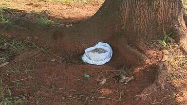 Cães são encontrados mortos com suspeita de envenenamento em Cravinhos, SP - Corpos de animais foram encontrados em uma praça da cidade.