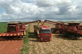 Colheita do milho em Goiás começa com boa produção e bom preço - Clima ajudou e produtividade é boa, apesar do ataque de pragas. Em Jataí, tem agricultor colhendo 230 sacas por hectare.