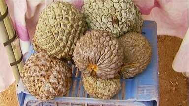 Cultivo do marolo ganha espaço no sul de Minas Gerais - O preço é bom e a procura é grande. A fruta, de cultivo simples, sabor e aroma marcantes, é usada no preparo de muitas receitas.