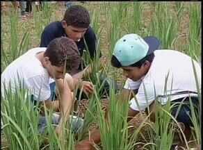 Escola Agrícola incentiva filhos de produtores de Porto Nacional - Escola Agrícola incentiva filhos de produtores de Porto Nacional.