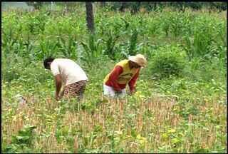 Acumulado da chuva em Juazeiro do Norte já chega a 900 milímetros - Chuva contribui para a redução do preço do feijão no comércio da cidade.