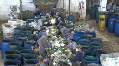 Parte de material recolhido para reciclagem é descartado - Consumidor pode limpar materiais antes de jogas no lixo