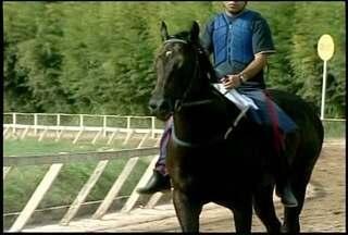 Cavalo que vale R$ 6 milhões foi vendido para os EUA - Com apenas 3 anos, o cavalo ganhou várias corridas