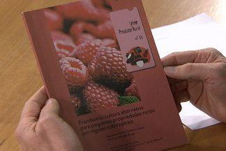 Esalq tem publicação sobre o cultivo de frutas vermelhas - Livro custa R$ 12,50, já com as despesas de correio.