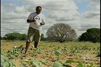 Comunidade quilombola preserva tradições seculares - Com as chuvas eles investiram no cultivo de milho e feijão.
