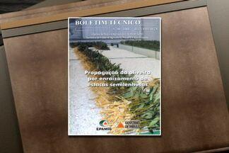 Publicação ensina a cultivar uma muda de oliveira - Escreva para a Epamig - Empresa de Pesquisa Agropecuária de Minas Gerais. O endereço é Avenida José Cândido da Silveira, 1647 - Belo Horizonte. Cep: 31170-495.
