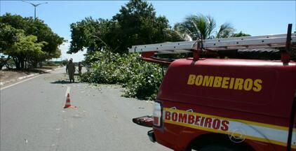 JPB2/JP: Árvores oferecem riscos para a população, em João Pessoa - Por causa da chuva 15 árvores tombaram na cidade. A população que identificar algum problema nas árvores pode ligar para a Semam/ Jp, no telefone: 3218-9203.