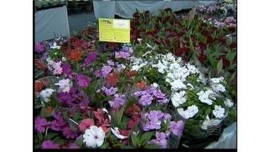 Tradicional exposição de flores atrai apaixonados por plantas - Feira é realizada em prol da Associação de Proteção aos Cegos.