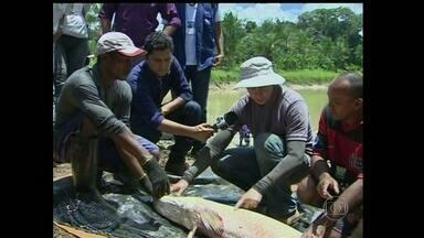 Criadores de peixe do Amapá recebem assistência técnica para melhorar a produção - Com a tecnologia, dá para monitorar os tanques e descobrir com rapidez qualquer problema.