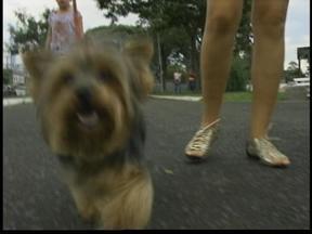 Moradores pedem responsabilidade para donos de animais domésticos - Confira a matéria.