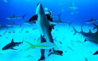 """Conheça o mar que serviu de cenário para filmes de Hollywood - A """"Expedição Bahamas"""" visitou o mar, na Ilha de Nassau, onde foram feitos dezenas de filmes. É nesse local que Steven Spielberg, diretor do primeiro filme da série """"Tubarão"""", busca inspiração e passa férias."""