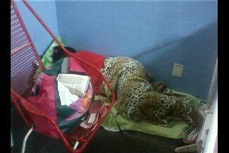 Pacientes do hospital de Parauapebas reclamam das condições de internação - Muitos ficam sem lençóis e os acompanhantes dormem até no chão.