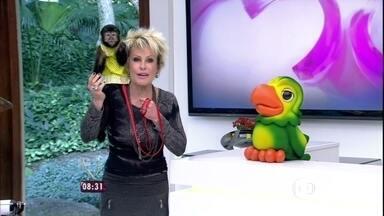 Ana Maria começa a manhã com a macaca Jujú - Veja vídeos inusitados de diversos bichinhos