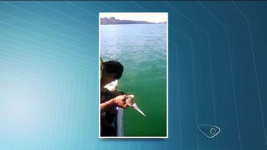 Pássaro é resgatado após ficar preso à uma rede de pesca, em Vitória - Ave foi retirada pelos guarda-vidas e depois libertada.