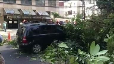 Ventania provoca queda de árvores em vários bairros do Rio - Ventania provoca queda de árvores em vários bairros do Rio. Uma delas caiu em cima de um carro na rua Jardim Botânico.