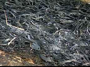 Bombeiros registram aumento nos casos de incêndio em Uberaba - Cerca de 120 casos foram registrados em 2014, contra 322 em 2013. Posturas diverge na multa quando objetivo é limpeza de terreno ou crime.