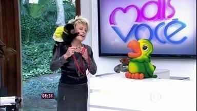 Ana Maria Braga interage com macaco no Mais Você - Reveja o momento animal da apresentadora