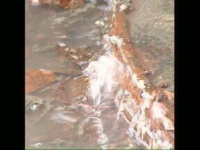 Chefe do IAP diz que pedra atirada dentro de boca de lobo entupiu a rede - Esgoto vazou por várias horas e chegou ao Ribeirão Cambezinho, um dos afluentes do Lago Igapó.