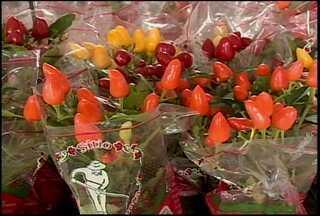Começou hoje o 2º festival de flores de Holambra - São cerca de 200 espécies de folhas e flores de várias regiões do país que têm atraído muitos visitantes